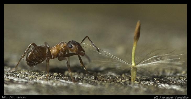 """фото """"Трианон на связь не вышел"""" метки: природа, макро и крупный план, насекомое"""