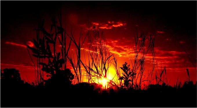 """фото """"from a grass part 3"""" метки: пейзаж, осень"""