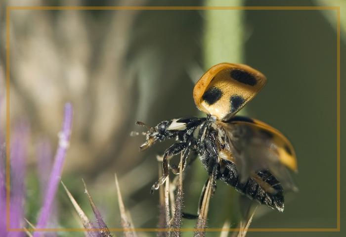 """фото """"Надоело позировать, или побег модели..."""" метки: природа, макро и крупный план, насекомое"""