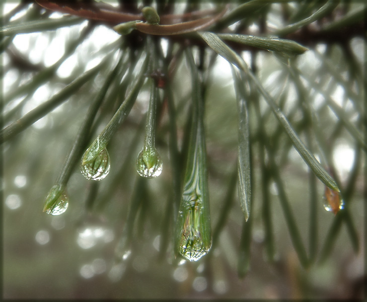 """фото """"De petits univers"""" метки: природа, макро и крупный план, цветы"""