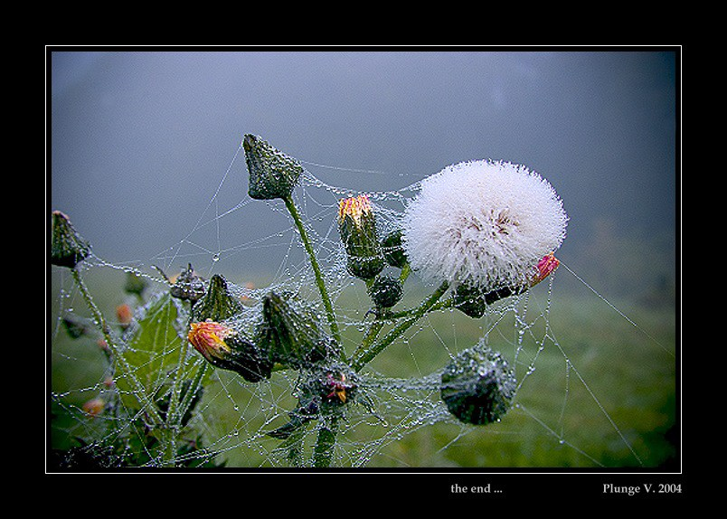 "фото ""the end..."" метки: природа, фотомонтаж, цветы"