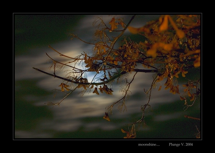 "фото ""... moonshine ..."" метки: природа, фотомонтаж,"