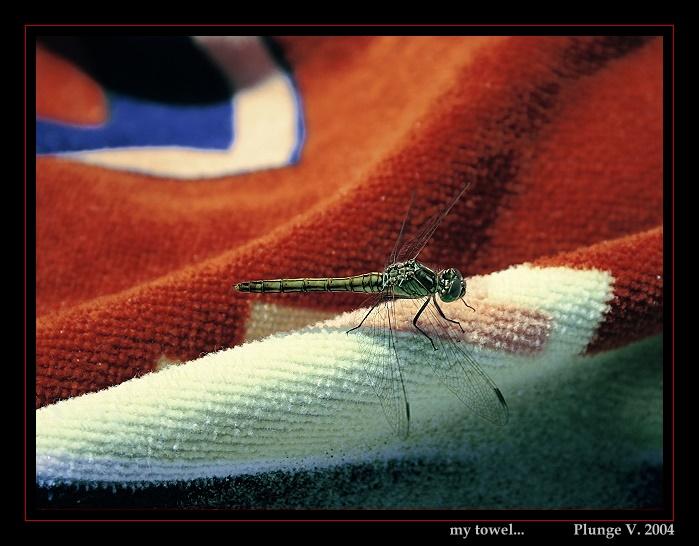 "фото ""my towel..."" метки: природа, фотомонтаж, насекомое"
