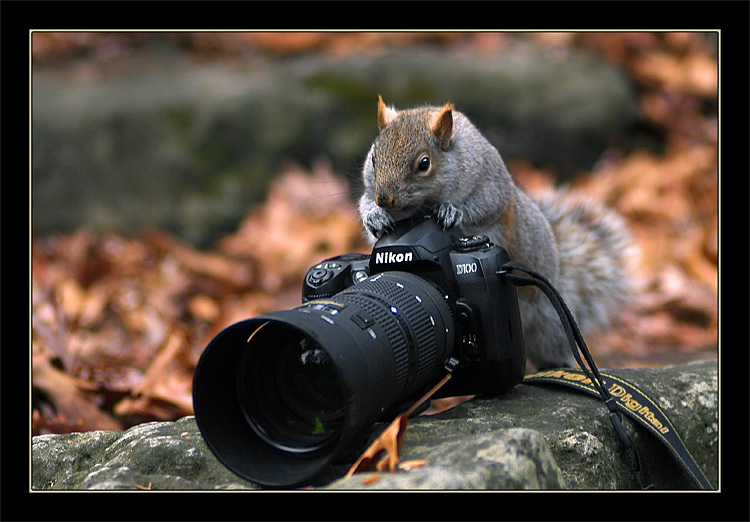 """фото """"Пора перейти на цифру!!!"""" метки: природа, юмор, домашние животные"""