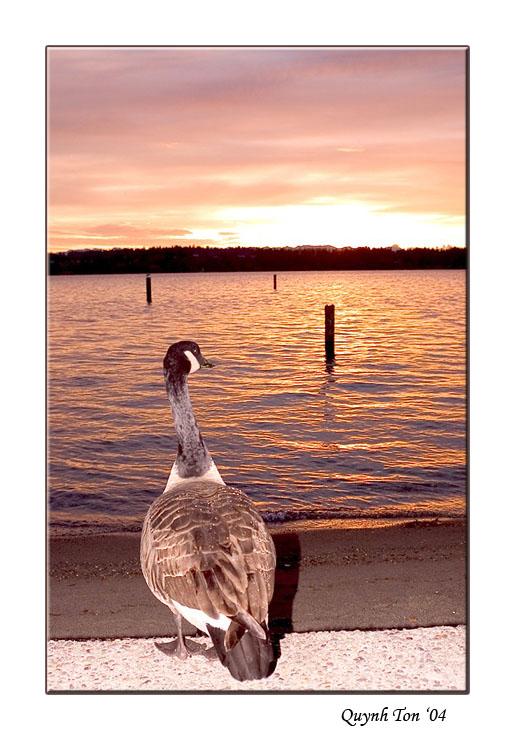 """фото """"Longing"""" метки: природа, пейзаж, дикие животные, закат"""