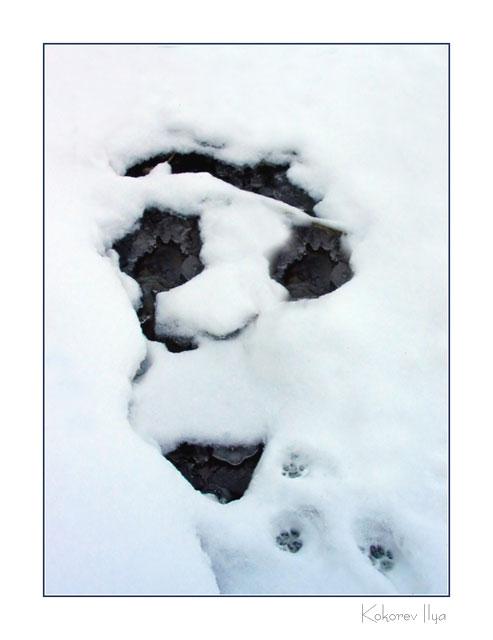 """фото """"..."""" метки: пейзаж, абстракция, зима"""