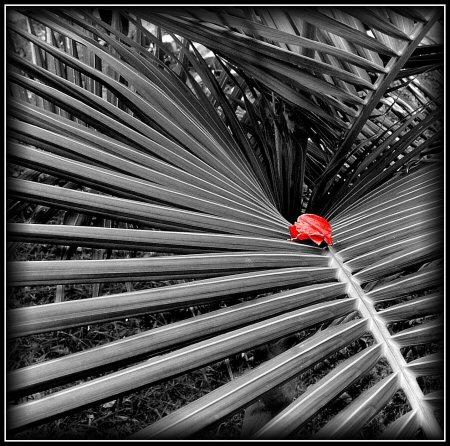 "фото ""The trap"" метки: природа, цветы"