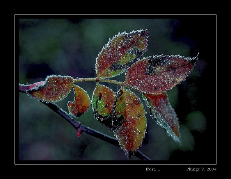 "фото ""frost ..."" метки: природа, фотомонтаж, цветы"