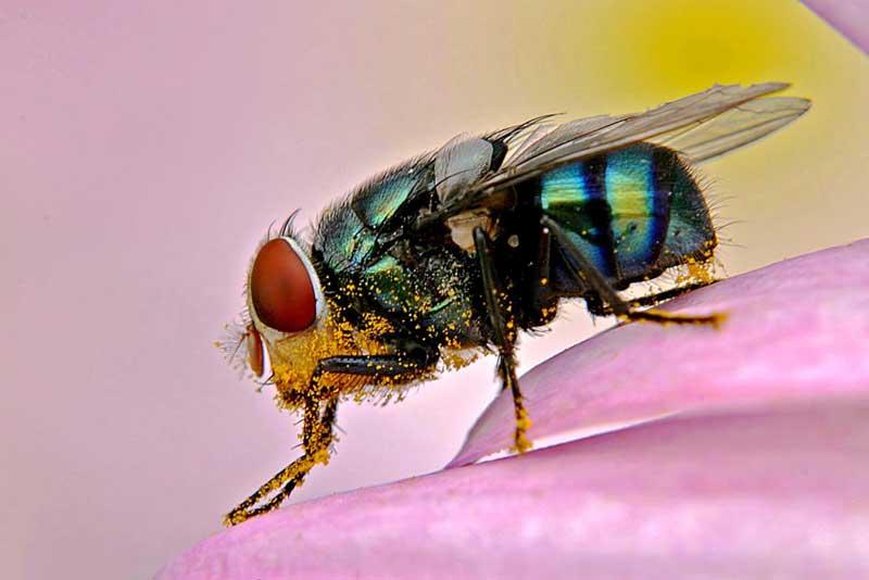 """фото """"The Fly"""" метки: макро и крупный план,"""