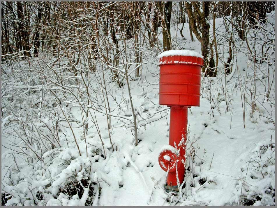 "фото ""standing in the wood"" метки: пейзаж, зима"