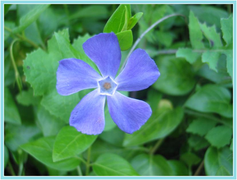 """фото """"Flor"""" метки: макро и крупный план, природа, цветы"""