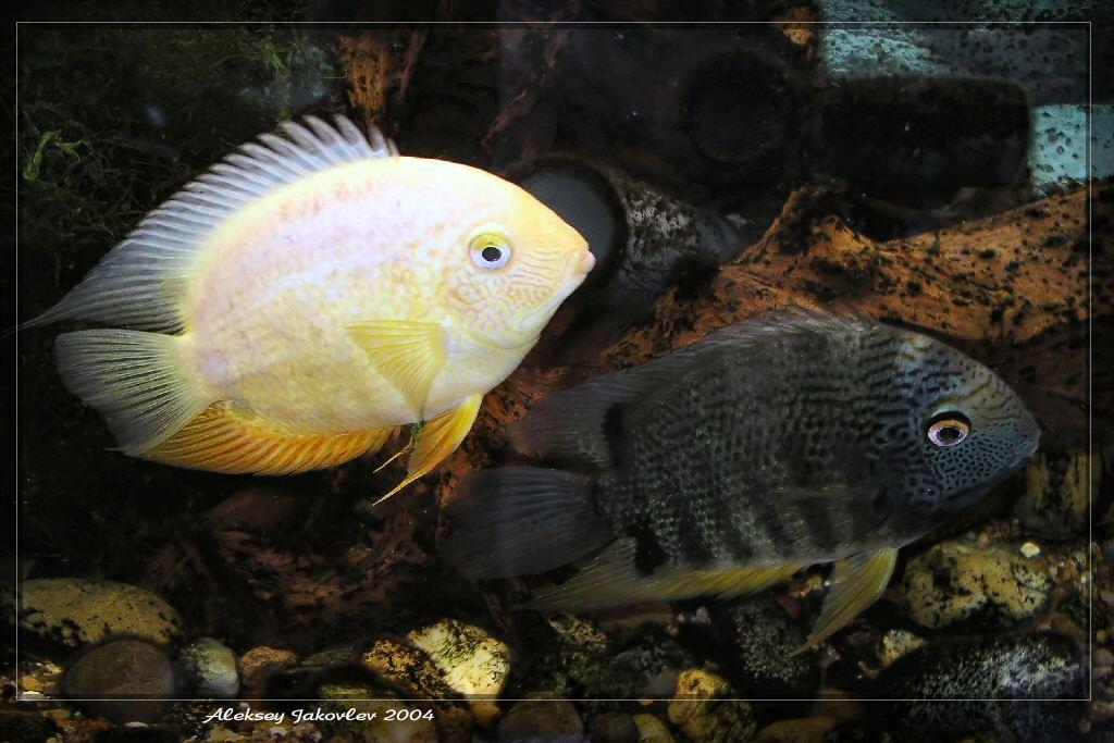 """фото """"Мы с Томарой ходим парой"""" метки: природа, подводные, домашние животные"""