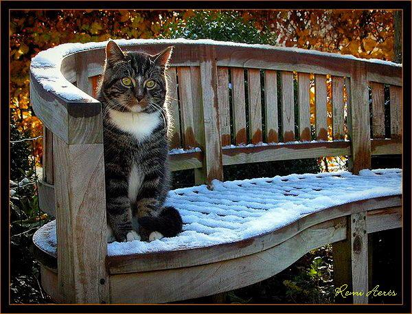 """фото """"mauscather in wintertime!!"""" метки: природа, домашние животные"""