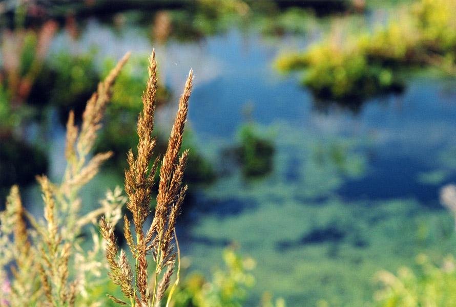 """фото """"Во всем найти очарованье ..."""" метки: природа, пейзаж, вода, цветы"""