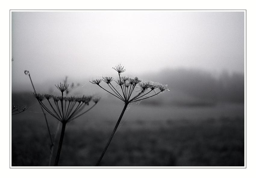 "фото ""Drying out .... Maybe next year ?"" метки: природа, черно-белые, цветы"