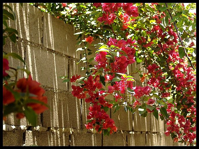 "фото ""Red Flowers"" метки: природа, пейзаж, лето, цветы"