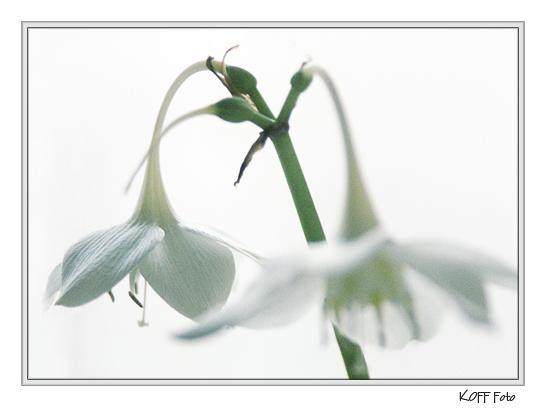"""фото """"Домашние цветы #3"""" метки: природа, цветы"""