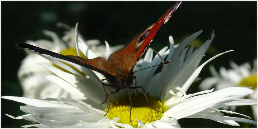 """фото """"perfect landing (front view)"""" метки: макро и крупный план, природа, насекомое"""