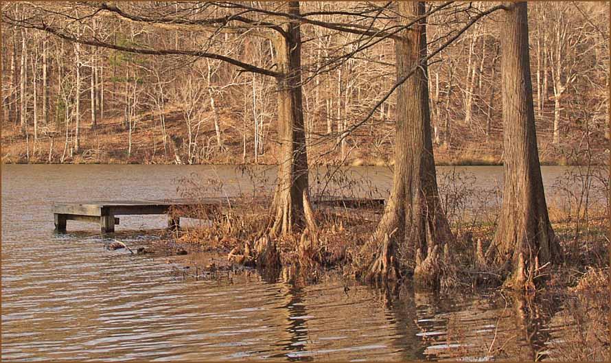 "фото ""Sounds of Silence"" метки: пейзаж, вода, лес"