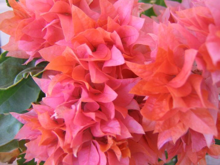"фото ""Flowers"" метки: природа, цветы"