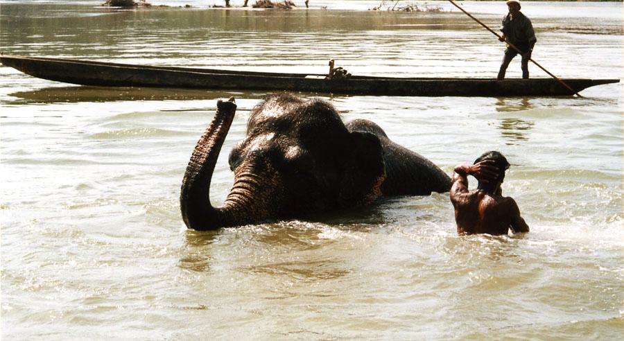 "фото ""Купание красного слона"" метки: жанр, путешествия, Азия"