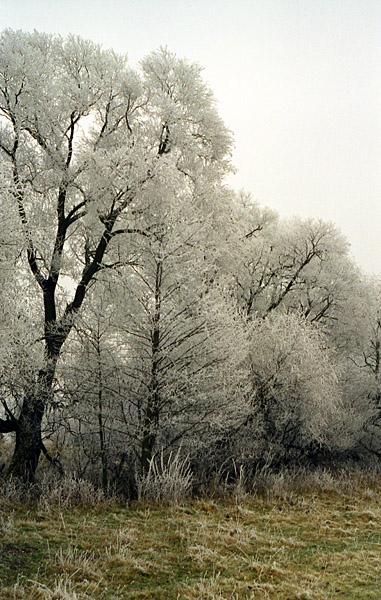 """photo """"Hoar-frost (2)"""" tags: landscape, winter"""
