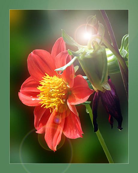 """фото """"Вспоминая лето"""" метки: природа, цветы"""