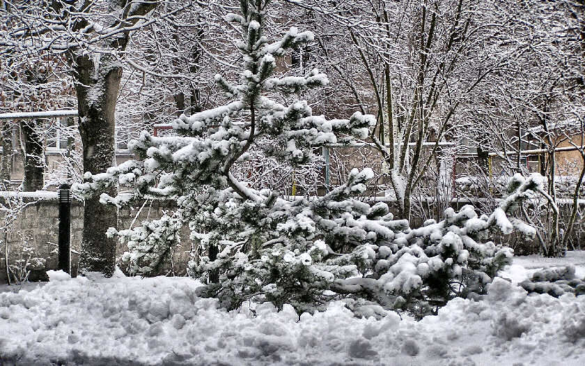 "фото ""елка"" метки: природа, цветы"