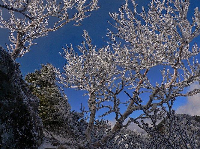 "фото ""иней"" метки: пейзаж, зима, лес"