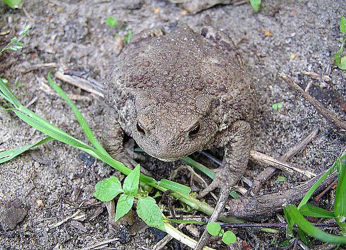 """фото """"camouflage"""" метки: природа, дикие животные"""