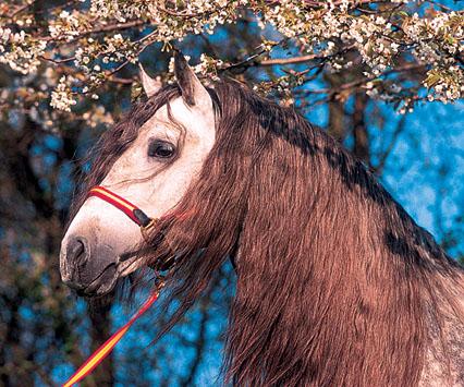"""фото """"Horse"""" метки: природа, домашние животные"""