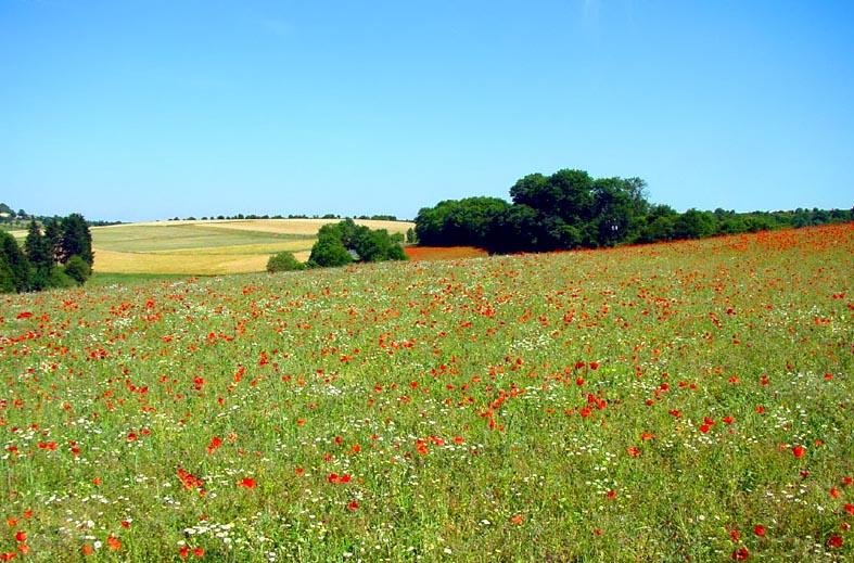 """фото """"Маковое поле"""" метки: пейзаж, лето"""