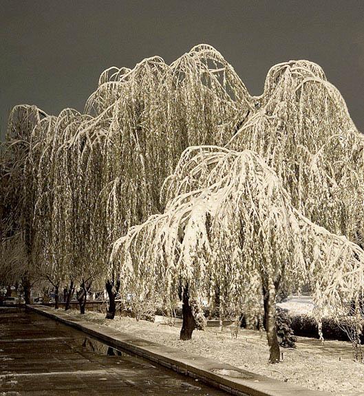 "фото ""холодно"" метки: природа, цветы"
