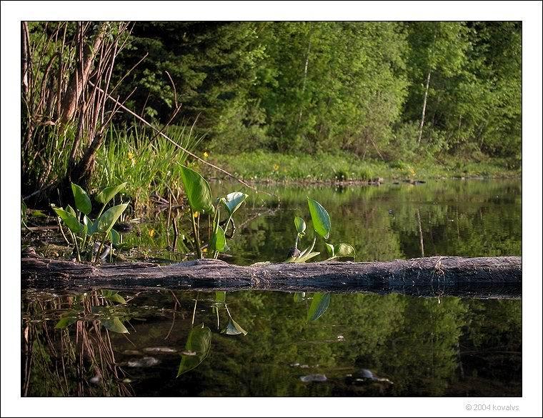 """фото """"отражения (для Игоря Торгачкина)"""" метки: природа, пейзаж, вода, цветы"""