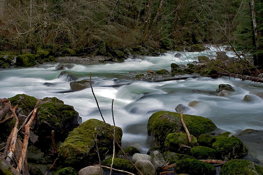 "фото ""green flavor"" метки: пейзаж, вода, лес"