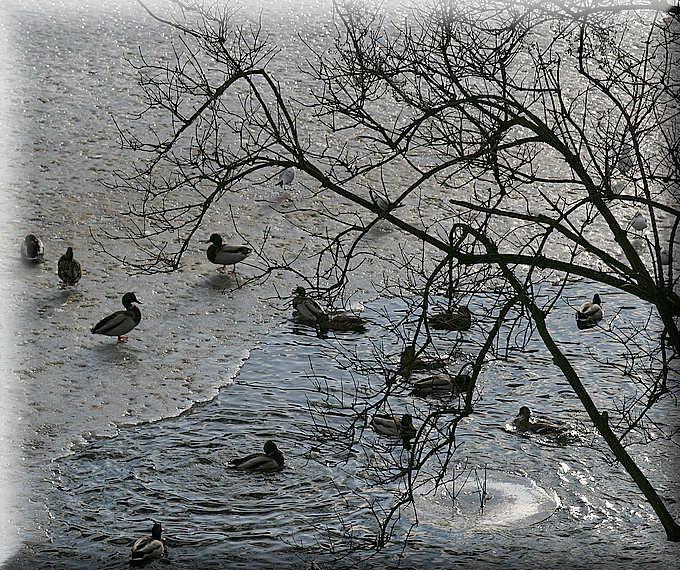 """фото """"Morning bath"""" метки: природа, пейзаж, вода, дикие животные"""
