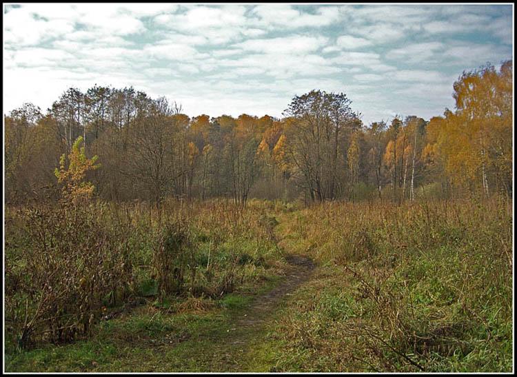 "фото ""Тропинка в никуда"" метки: пейзаж, лес, лето"