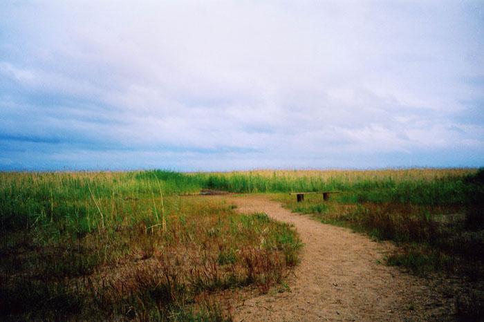 """фото """"тоска"""" метки: природа, пейзаж, лето"""