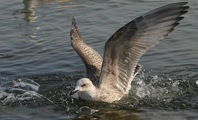 """фото """"Landing"""" метки: природа, дикие животные"""