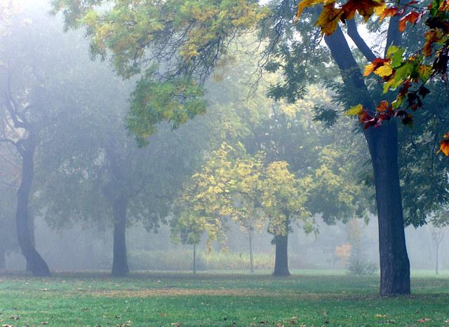 "photo ""Untitled photo"" tags: landscape, autumn, forest"