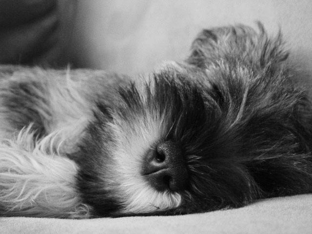 "фото ""Baby puppy sleeping"" метки: разное,"