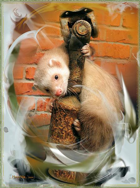 "фото ""соло на кардане (из серии ""фото-арт"")"" метки: природа, digital art, домашние животные"