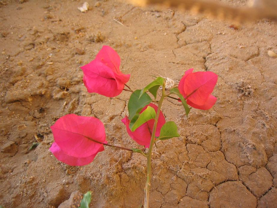 """фото """"****"""" метки: природа, цветы"""