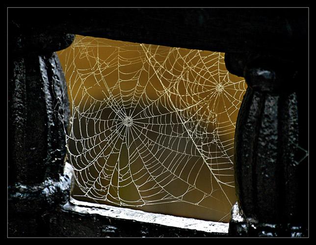 """фото """"паутинка"""" метки: макро и крупный план,"""