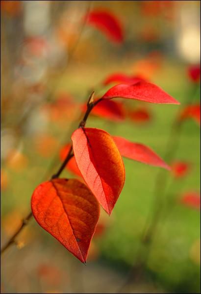 """фото """"Осенний этюд"""" метки: пейзаж, макро и крупный план, осень"""