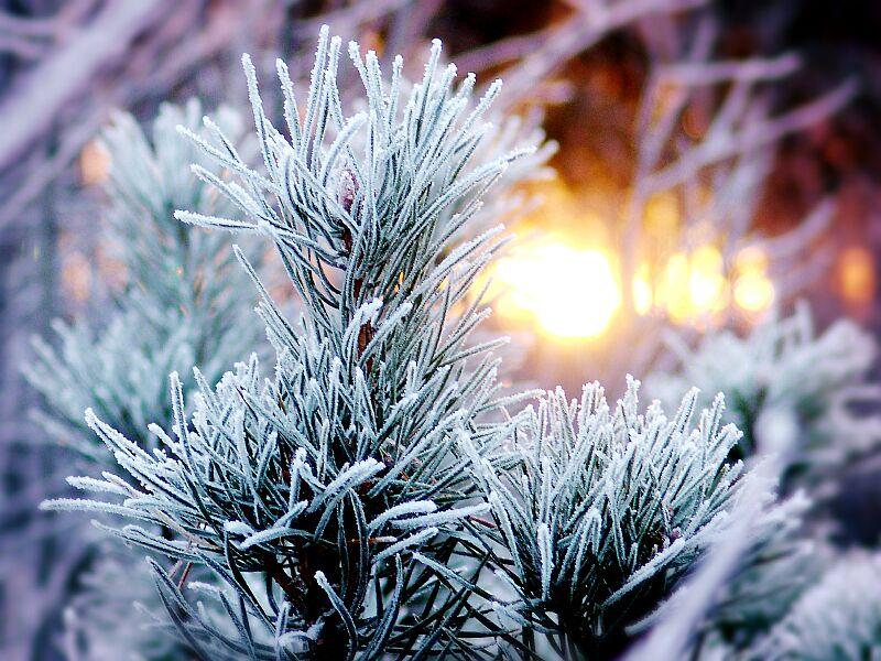 """фото """"морозное утро"""" метки: пейзаж, закат"""