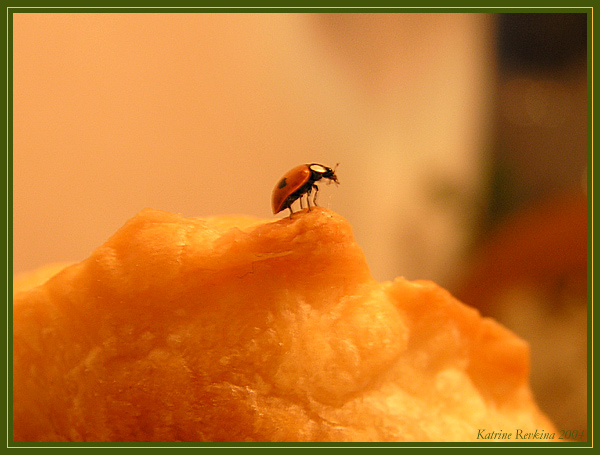 """photo """"* * *"""" tags: nature, macro and close-up, insect"""