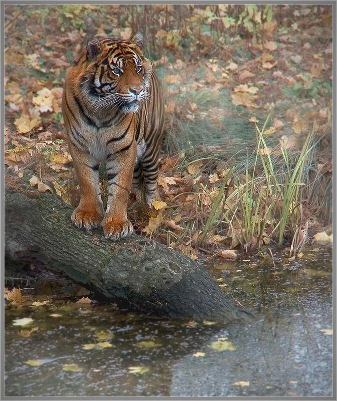 """фото """"Ожидание у водопоя."""" метки: природа, пейзаж, дикие животные, осень"""