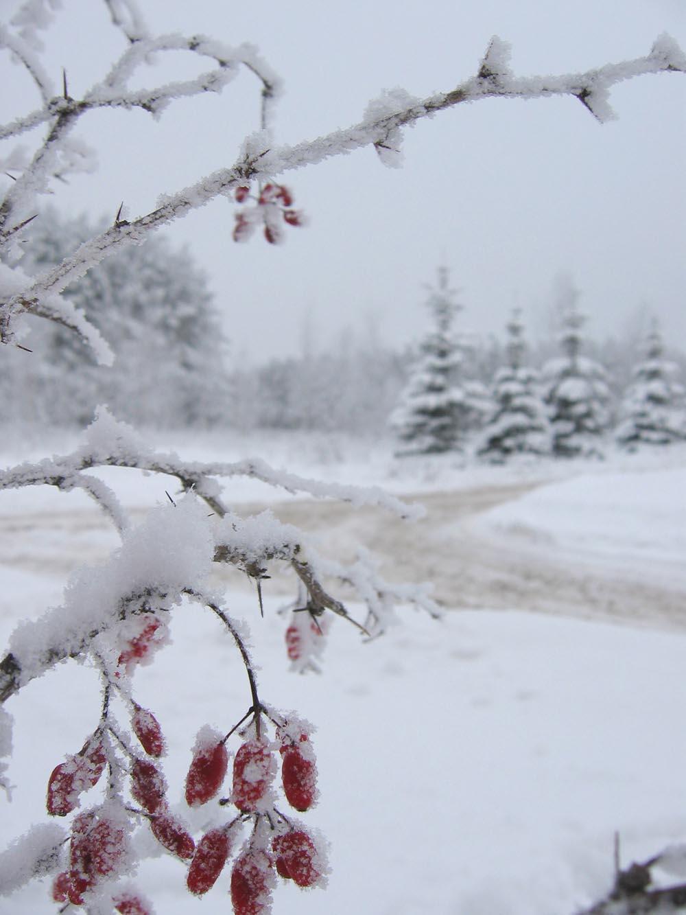 Зима фото и открытки, сам днем