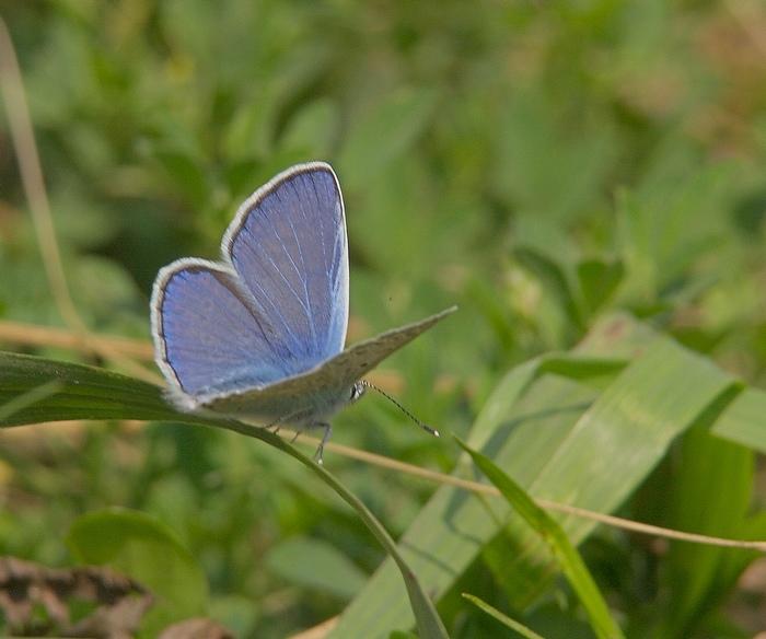 """фото """"Мотылек"""" метки: природа, насекомое"""